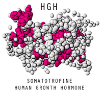 hgh-best