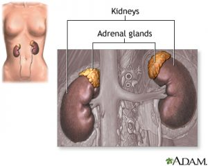 Diagram of kidneys 300x240