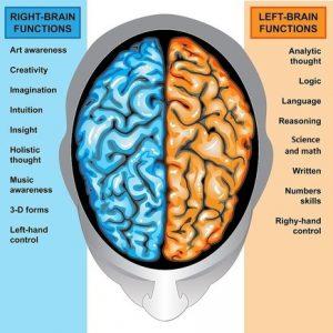 left brain right brain